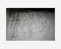 Image grimpante (une image gagnée par les propriétés du lierre dont elle est l'image)  2013 - photographie découpée et épinglée en avant du mur - dimensions: 70x100cm